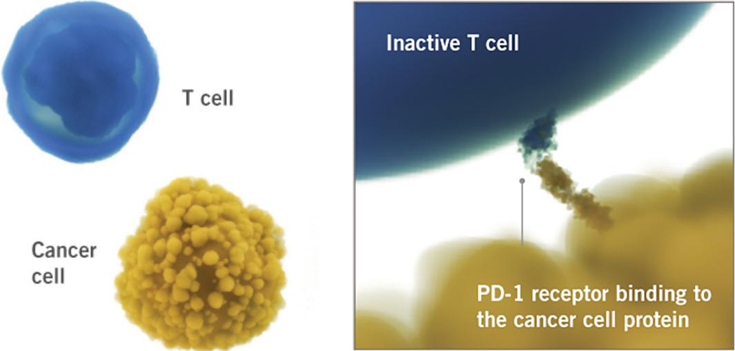 LIBTAYO® (cemiplimab-rwlc) mechanism of action